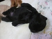 子犬 2008・7 418.jpg
