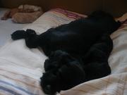 子犬 2008・7 471.jpg