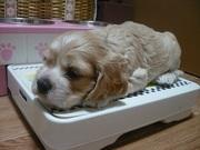 子犬 2008・7 779.jpg