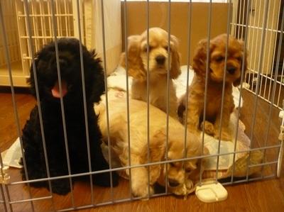 子犬 2008.8.12 006.jpg