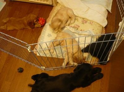 子犬 2008.8.12 010.jpg